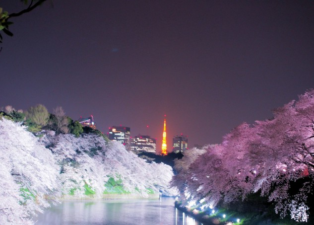 Sakura with Tokyo tower near Imperial Court