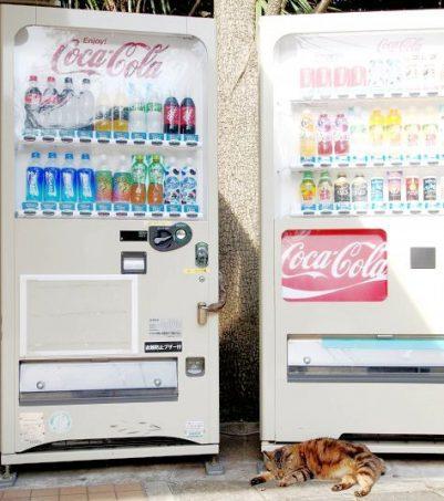 Vending machine with cat