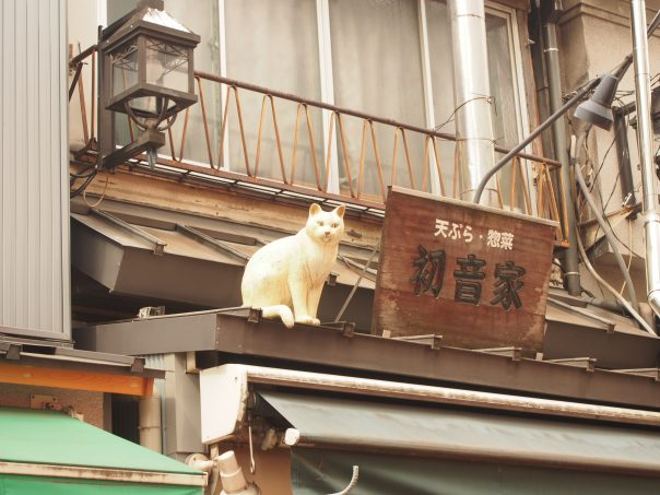 Cat on the roof of the shop