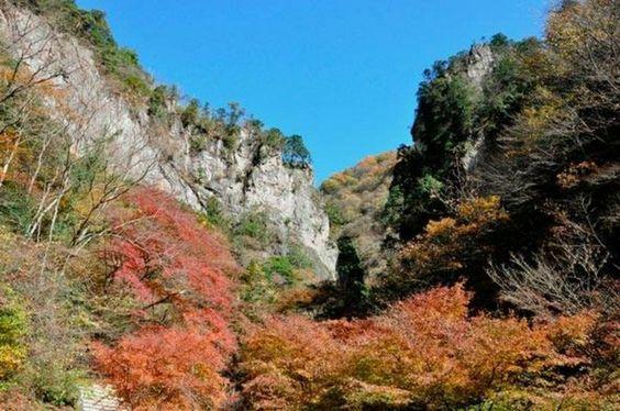 Autumn leaves around Hinohara Nature Lodge