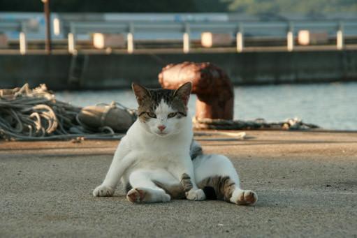 Cat of Tashirojima