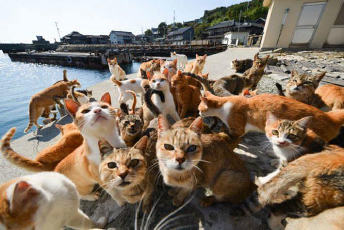 Cat of Aoshima