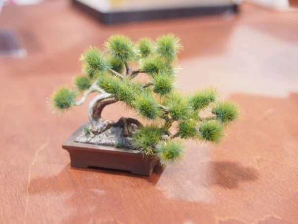 Bonsai Plastic Model
