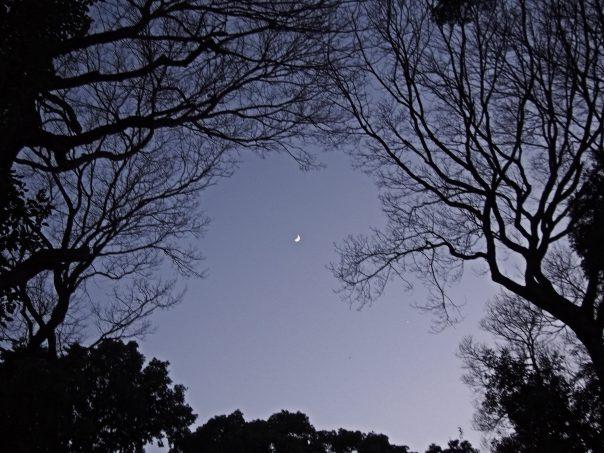 Sky from Meiji Jingu