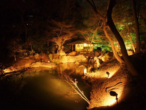 Japanese Garden in Cherry Blossom in Rikugien