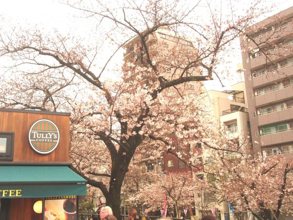 Tully's Coffee with Cherry Blossom