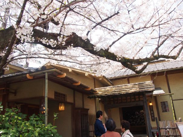 Restaurant with Cherry Blossom