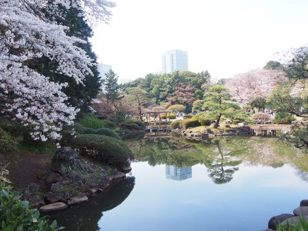 Pond of The Garden of Words