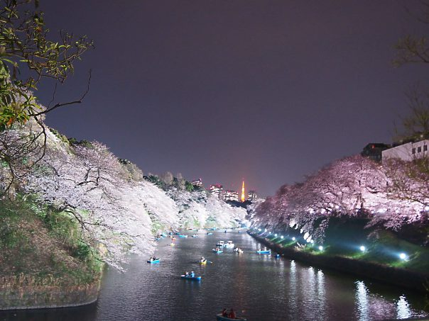cherry blossoms at both sides of the river with Tokyo Tower in the background