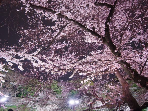 Cherry Blossom (Image for Beautiful 10 Japanese Anime commercials in YouTube)