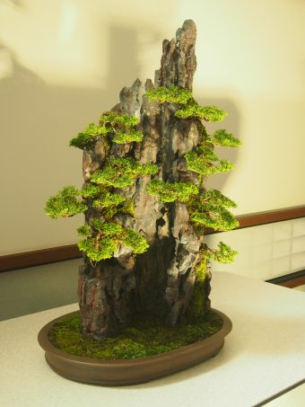 Shinpaku Juniper