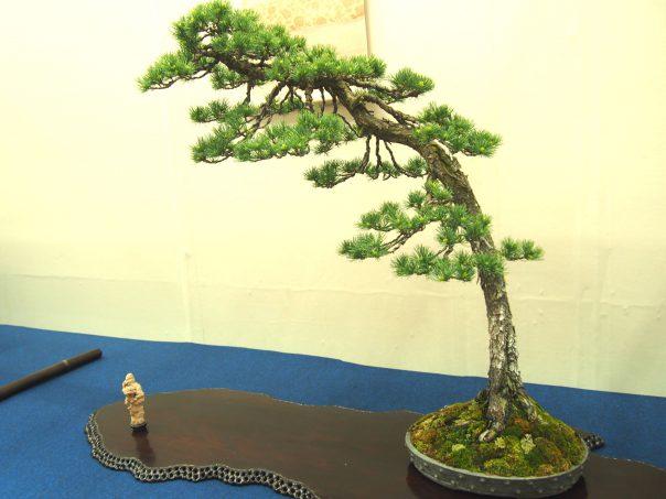Five Needle Pine