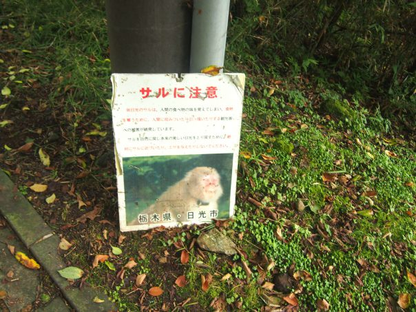 Notice of Wild Monkeys