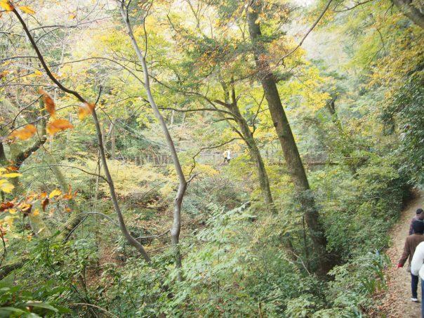 Forest and Miyama Bridge