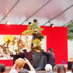 Bonsai Performance by Masashi Hirao