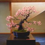 Sakura Bonsai